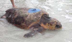 turtle photo 2