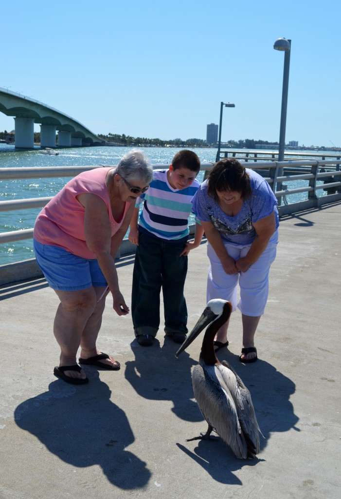 Joanne(NY), excited to see a pelican along with Dominic and Patricia from Bradenton