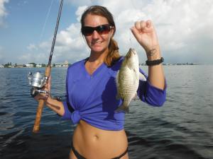 Mangrove snapper are plentiful in august, providing Siesta Key anglers with excellent action and table fare