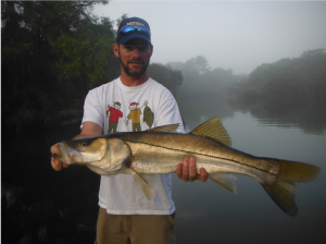 Big snook migrate into the Myakka River in the winter and are terrific sport!