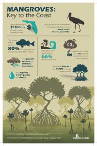 mangrove-infographic