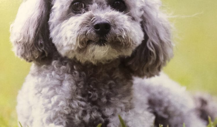 Murphy Pet